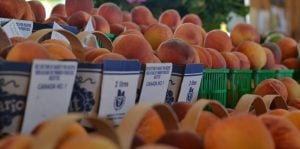 Peaches @ Lee & Maria's
