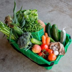 Lee and Maria's Sprout Subscription Box